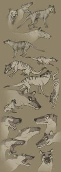 Thylacine Sketches by Vamtaro