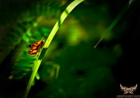 Tiny Butterfly by lee-sutil