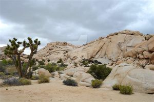 Joshua Tree by CTilsonPhotography