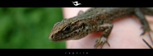reptile by zmeden