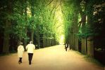 tree lined walkway by photorox33
