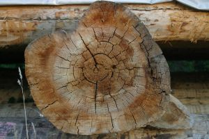 Wooden cross section by archaeopteryx-stocks