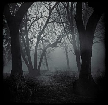 Whose Woods Are These IV by intao