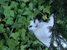 Dead cat with the face devoured by the ants 1/3 by ed---end