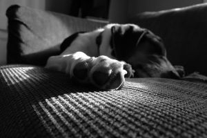 Naptime by phograph