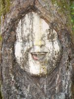Pictures of Children Trapped in Trees!!  (01) by SKiNBuS