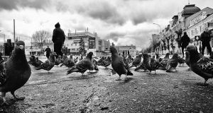 The world of pigeons by Marien-Draugven