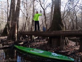 Up a Tree with a Paddle by PaddleGallery