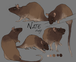 Nate Study 02 by DawnFrost