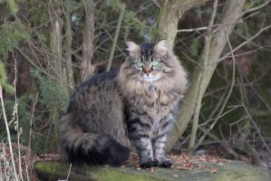 Cat in nature by BadMasterWolf