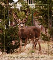 The Buck by kayaksailor
