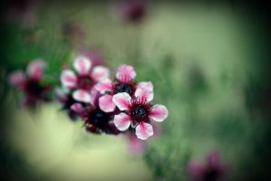 Blossoms 2 by Vividlight