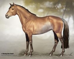 Hanoverian  for Morning Dust Ranch by Aomori