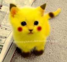 Pikachu Cat by Gluttonygh0st