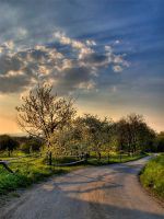 Way to the summer by polska