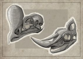 Skull Studies: 3 by Clotaire