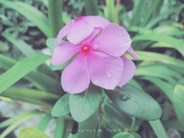 photography by pearl by pearl7052