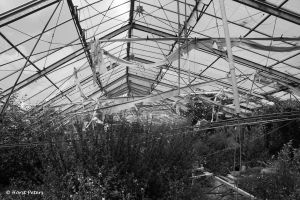 Greenhouse / Gewaechshaus 8 by bluesgrass