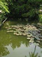 Lily Pond Stock by salt-stock