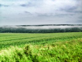 Fog and Field (in Hungary) by TigerCat-hu