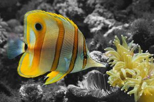 A color fish in b-w world by minikozy92