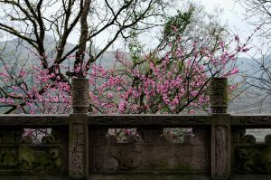 Spring in China by artspring
