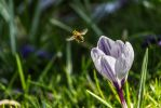 Buzzing Bee Business by paschlewwer