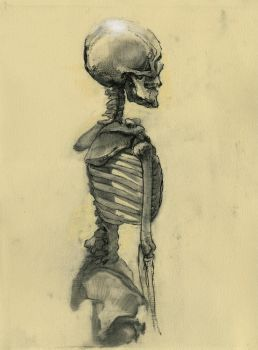 Skeleton by napoleoman