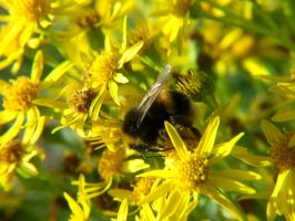 .-:Bumblebee Delight:-. by BlindedByLovexXx