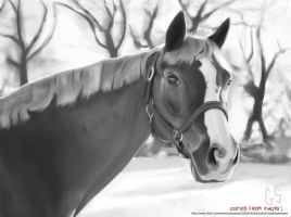 Hoarse Study 2 by GSphere