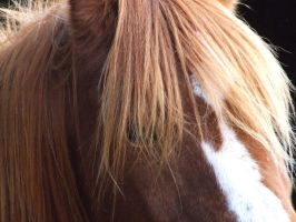 horse close up1 by phee-evans