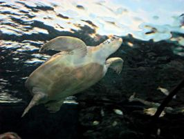 Turtle by annieheart12