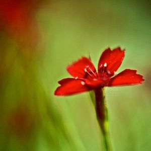 Red by NanaPHOTOGRAPHY