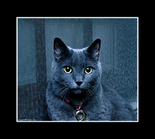 Russian Blue by Trippy4U