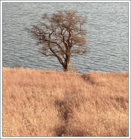 Lake Tree by kezz