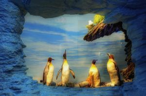 Five Penguins by HenrikSundholm