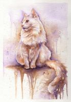The White Cat by bcduncan