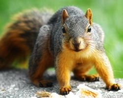 Squirrel by S-H-Photography