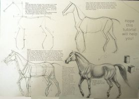 Horse drawing tutorial by Winnetah