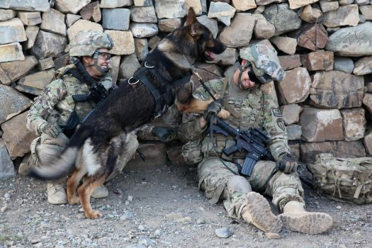 Military Working Dog by MilitaryPhotos