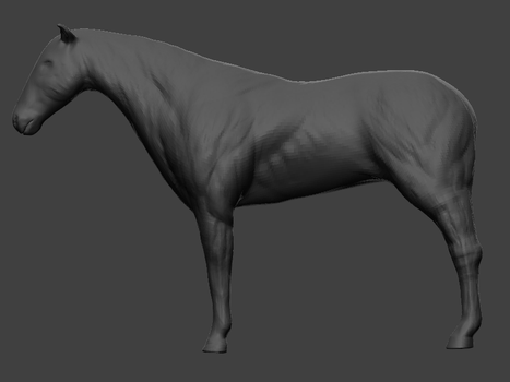 Horse anatomy study sculpt by elaamblood
