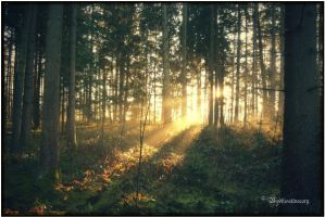 trees, light and so on by Bodhisattvacary
