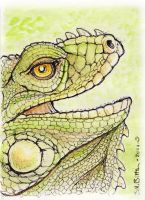 ACEO - Reptile by synnabar