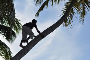 climbing on a coconut tree!! by Imaginative-girl