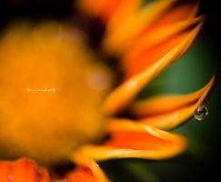 Orange Smoothness VI by Yassser84