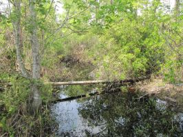 Everglades1 by DuctTapedPandasSTOCK