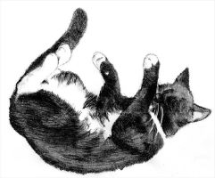 Karus the sleeping cat by AncientDruids