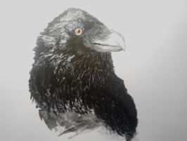 Painting of a Crow by mayIdrawyou