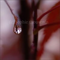 tree in a tear by prismes