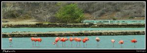 Group of flamingo's by simoner